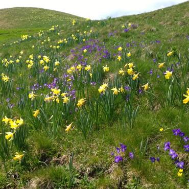 Au printemps : mai - juin