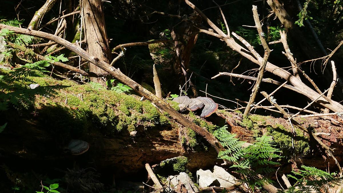 Chamrousse champignons cascade Oursière station montagne été isère alpes france