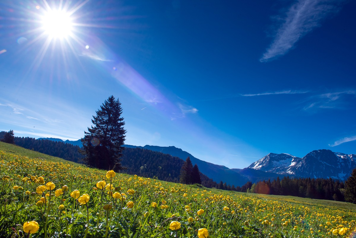 chamrousse-patrimoine-naturel-plateau-arselle-station-montagne-ete-alpes-france-images-et-reves-fr-2441