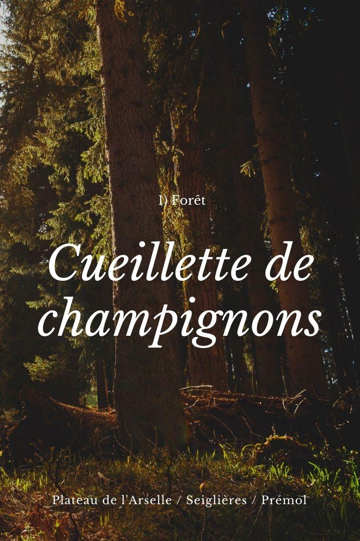 Chamrousse cueillette champignons activité automne station montagne grenoble isère alpes france - © EM - OT Chamrousse / Canva