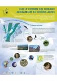 Affiche exposition oiseaux migrateurs Chamrousse