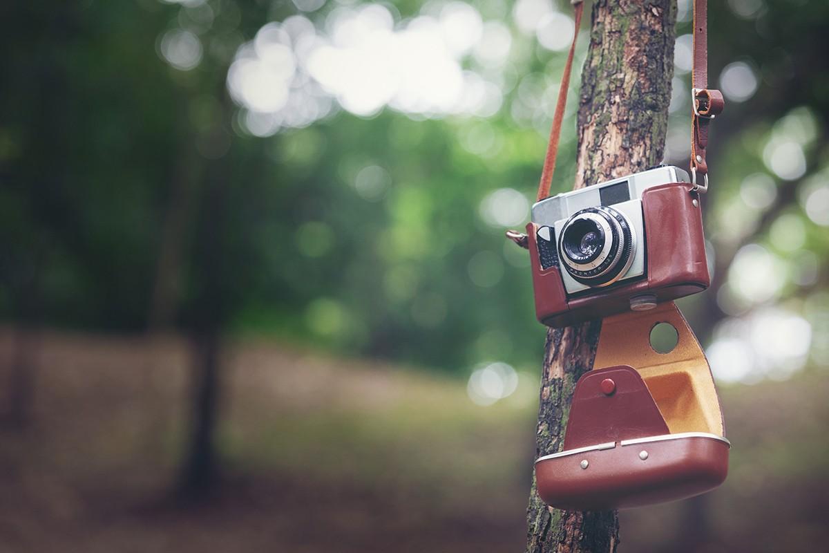 Photo film nature