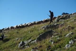Randonnées berger Chamrousse