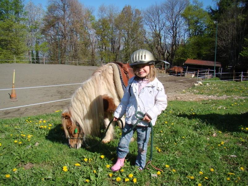 Poney cheval nature