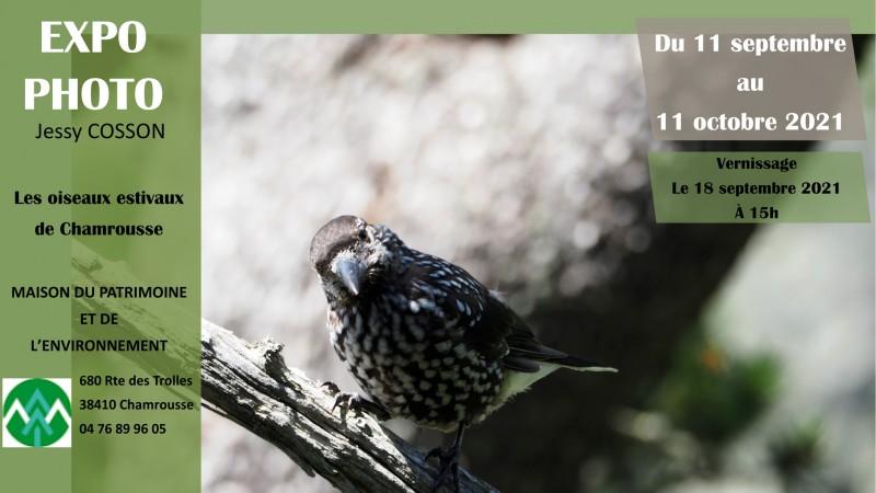 Exposition oiseaux Chamrousse